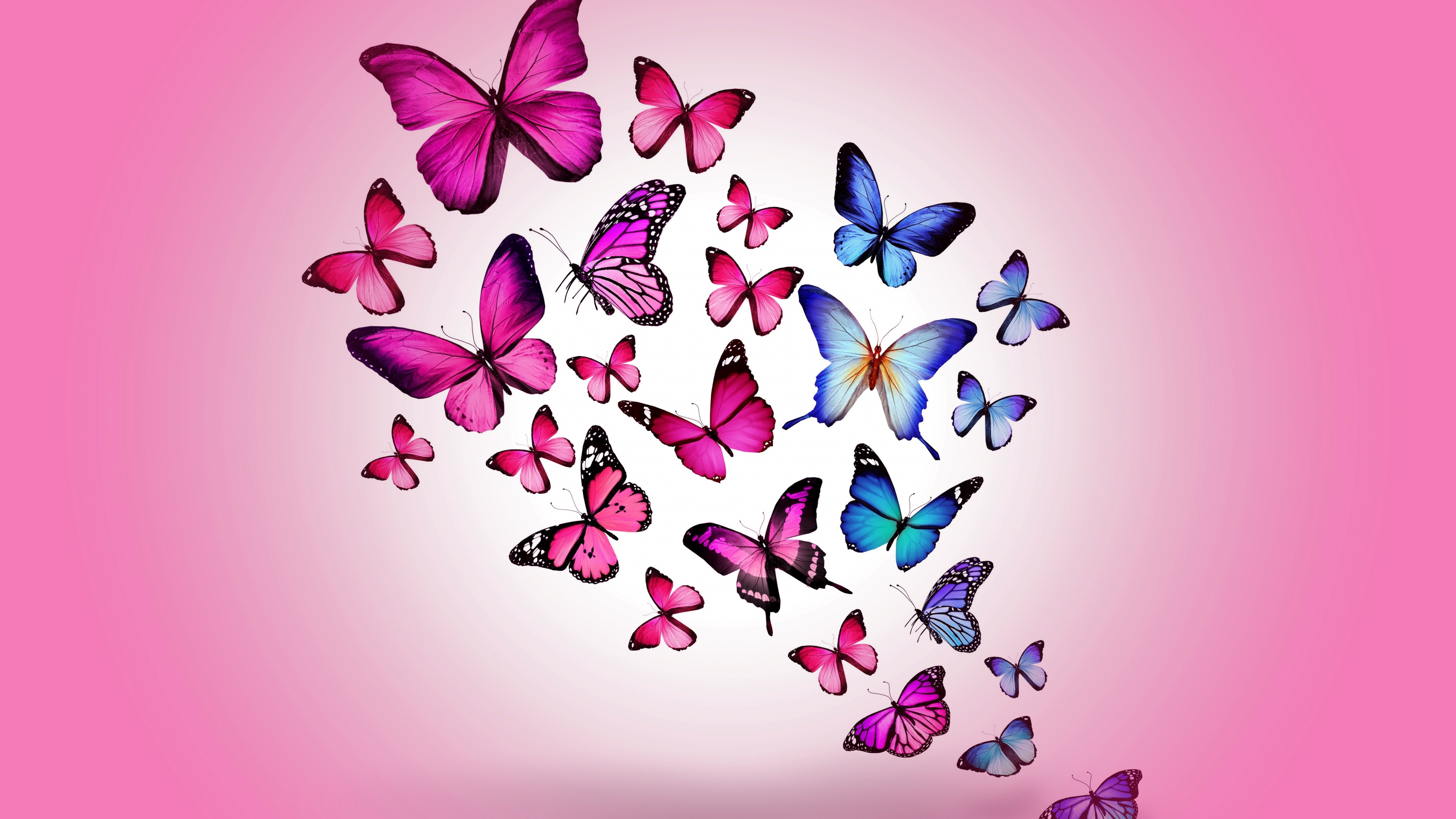 butterfly_drawing_flying_colorful_background_pink_96129_3840x2160